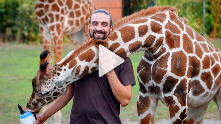 Recruitingvideo SerengetiPark